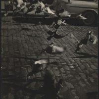 Arthur B. Rickerby, Birds and paved street, c.1950, silver gelatin print ©Arthur B. Rickerby