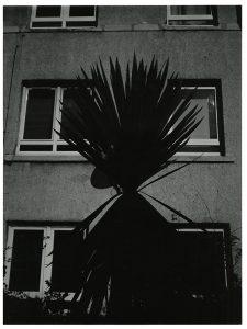"Joseph Glover, ""Palm,269"", 2020, Digital PhotoRag Baryta Print, 33,8 x 25,4 cm"